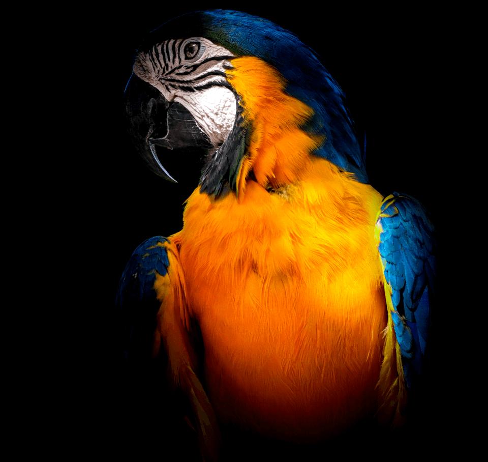 Parrot-16.png